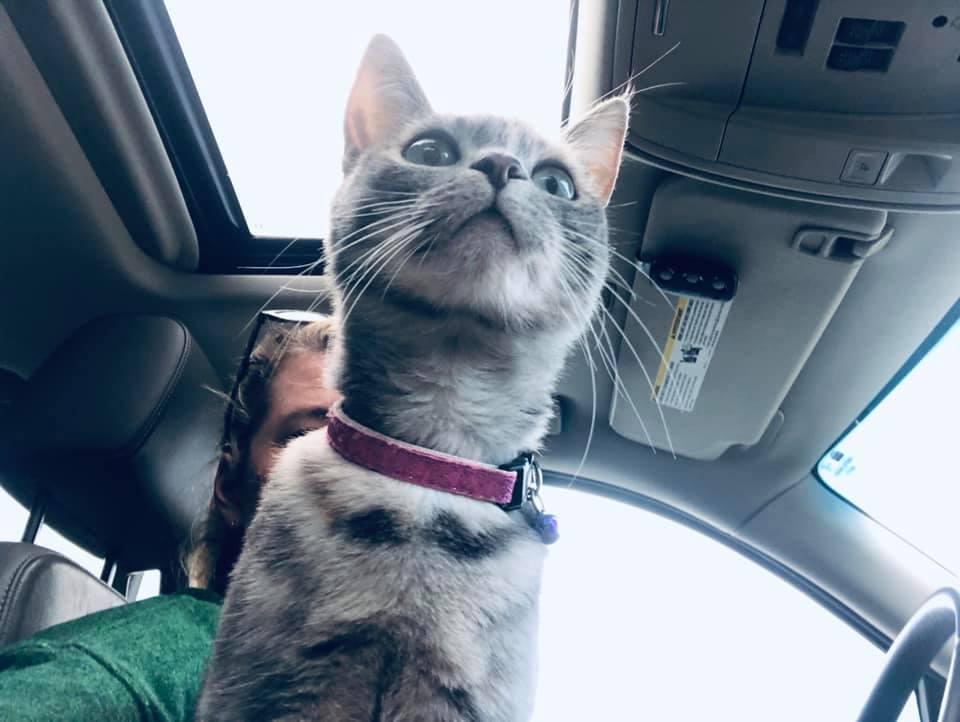 sassy_top_pet_april_5_2019