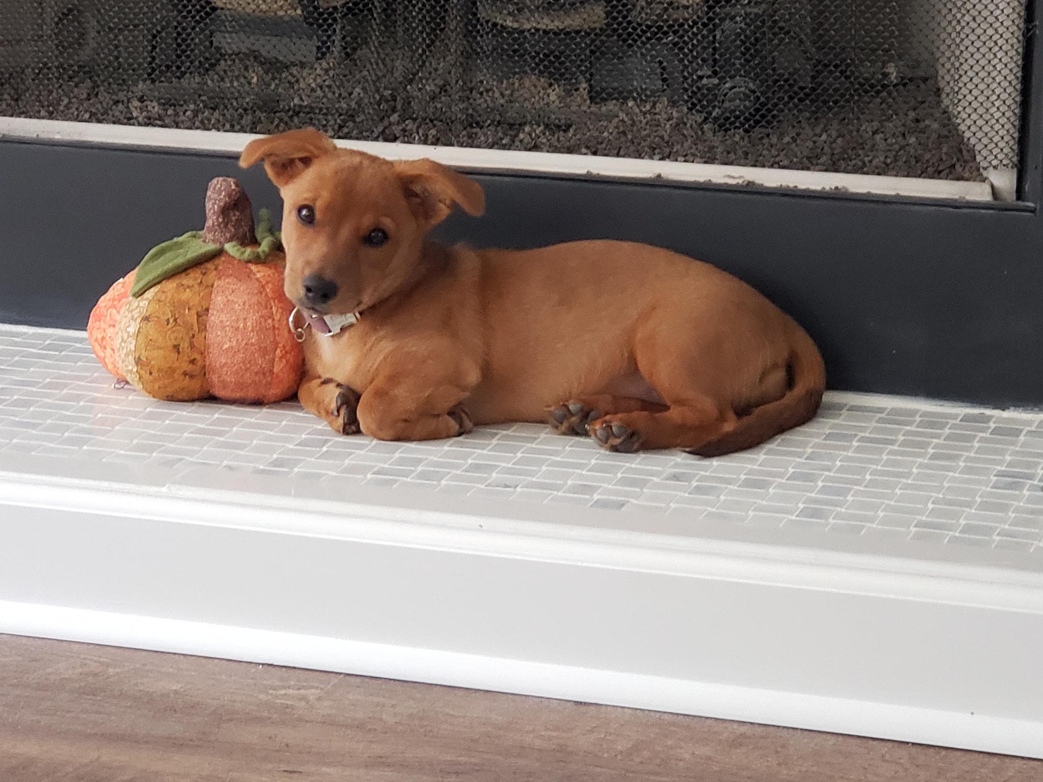 Top Pet Rose October 2019