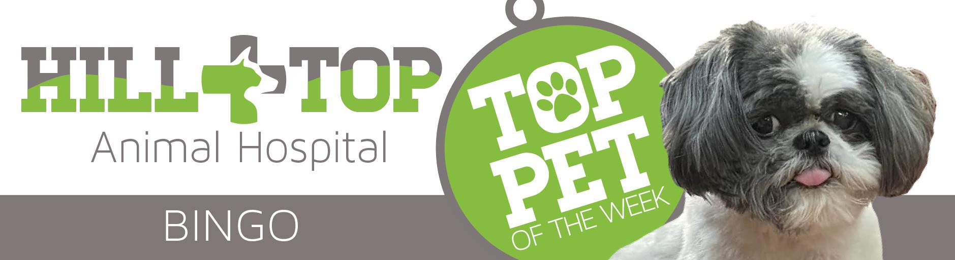 Hilltop Top Pet Bingo
